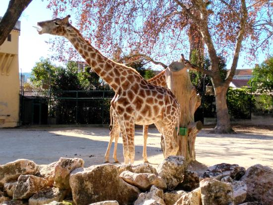 Zoo, Lisboa, Portugal - Picture of Lisbon Zoo, Lisbon - TripAdvisor