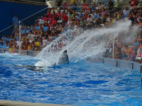 SeaWorld Orlando: Shamu Show