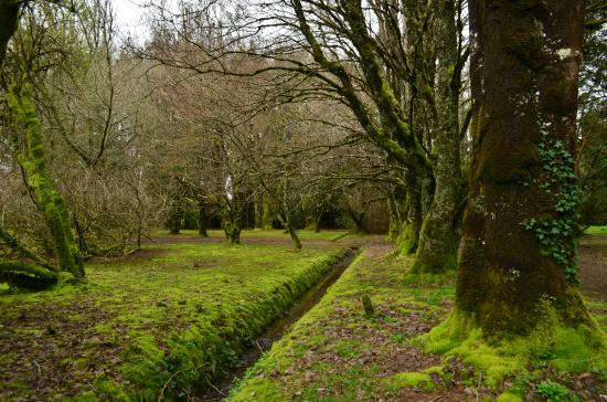Jard n bot nico picture of jardin botanico de la for Botanico jardin