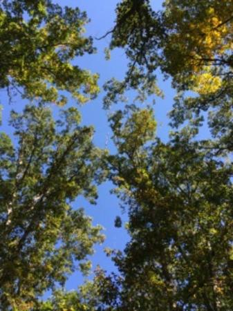 Ridgely, MD: Laying on the ground...looking up