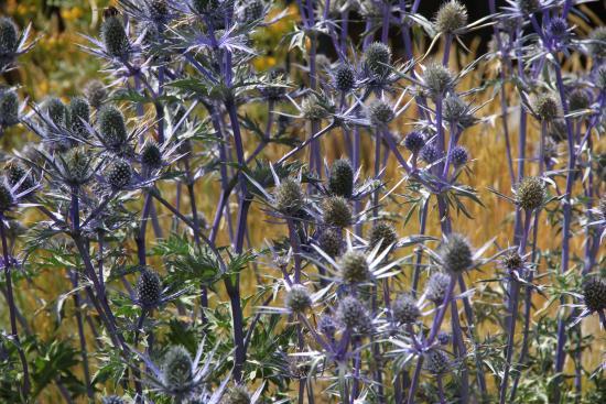 Punta Helbronner - Skyway Monte Bianco: Fiori parco botanico