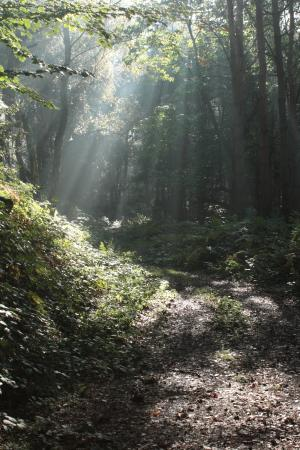 Dimmingsdale: Up through the woods