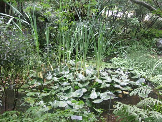 Pond   Wild Gardens Of Acadia