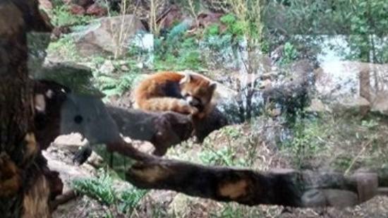 Zoológico Nacional de Chile: Guachini