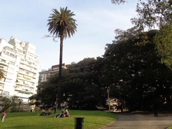 Palmera de Avellaneda