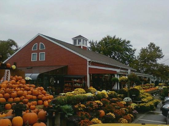 Lexington, MA: Wagon Wheel pumpkin time