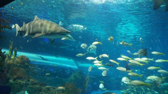Ripley's Aquarium Of Canada: shark tank