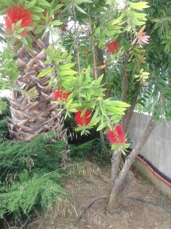 Il Melo Residence: Che tipo di fiori