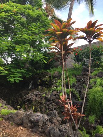 Foto de Wyndham Mauna Loa Village