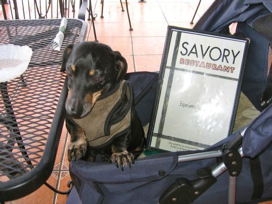 Savory Restaurant: Menu plus Dog