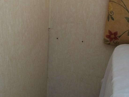Coopers Beach Holiday Park - Park Resorts: Screw holes where our bedside cabinet should have been