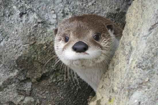 Linville, Carolina do Norte: otter
