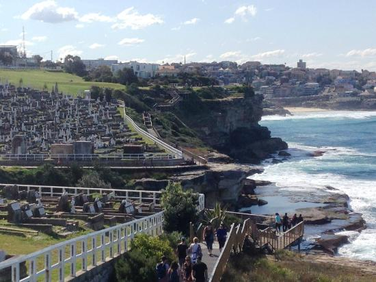 Bondi To Coogee Beach Coastal Walk Coast Along The Bondi To Coogee Trail Sydney