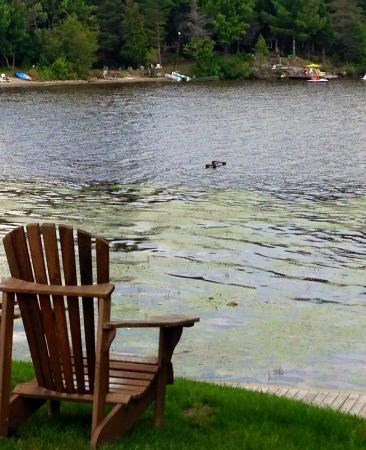 nice place to sit and overlook the lake picture of taboo muskoka