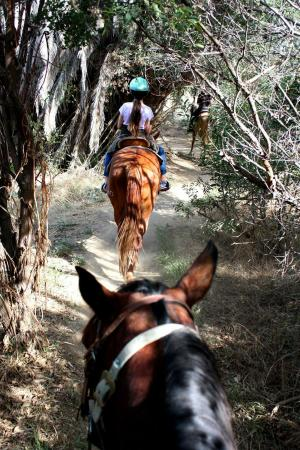 Country Trails And Riding School