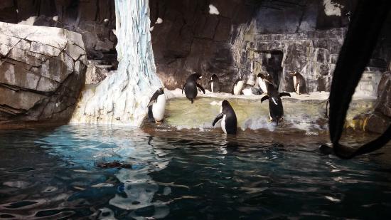 SeaWorld Orlando: fantastico
