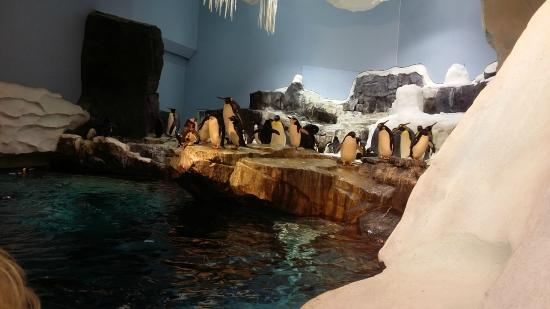SeaWorld Orlando: Emocionante