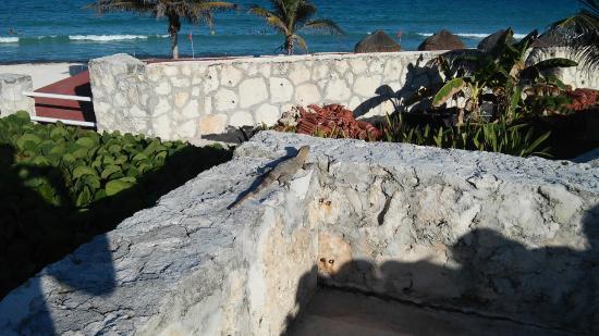 Solymar Cancun Beach Resort: Pasillos del hotel con iguana
