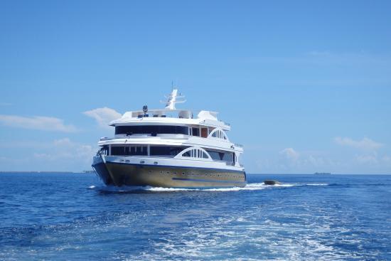 Dive The World Maldives: MV Orion