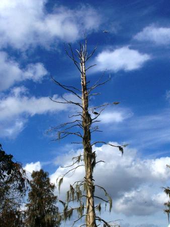 Circle B Bar Reserve: dead tree nesting