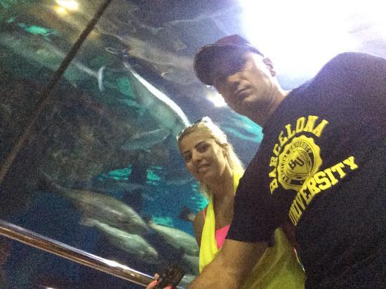 L'Aquarium de Barcelona: photo1.jpg