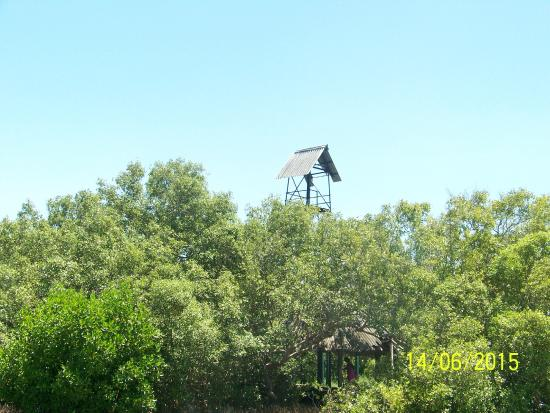 Muthupet Lagoon: Watch-tower......