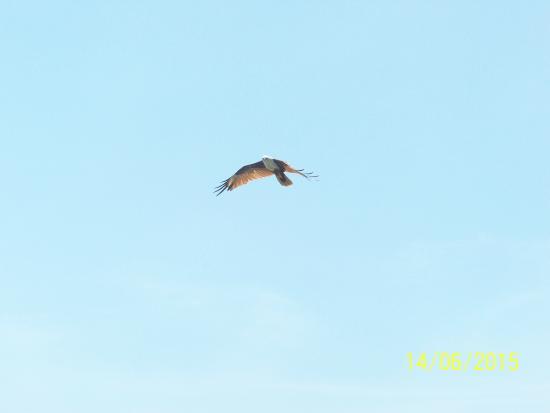 Thiruvarur, Indien: Sea Eagle.....