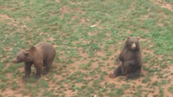 Parque de la Naturaleza de Cabarceno: Los osos en su hábitat natural