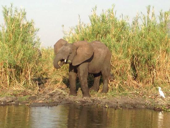 Liwonde Safari Camp : photo0.jpg