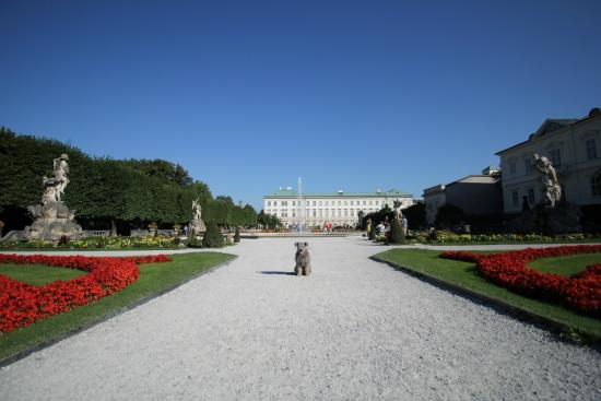 Mirabell slott og hager: Pumi Rover in the Mirabell garden, palace in the background