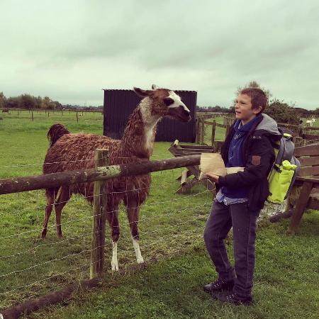 Fun Come Rain Or Shine Picture Of Animal Farm Adventure