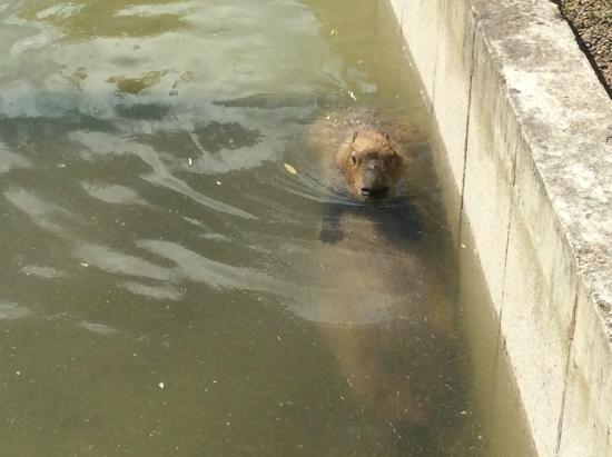Blackpool Zoo: Tapir