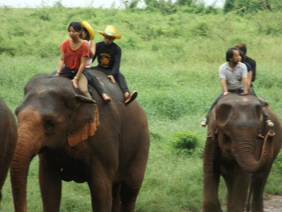 Ganesha Park: mémoire d'éléphant