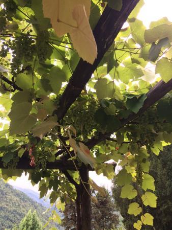 Agriturismo La Torre Photo