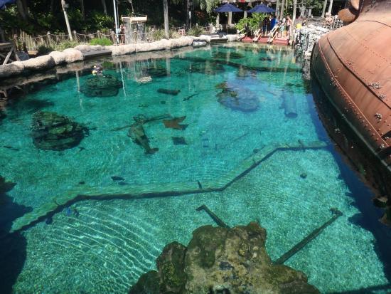 Estanque para nadar entre los peces picture of disney 39 s for Estanque para patos y peces