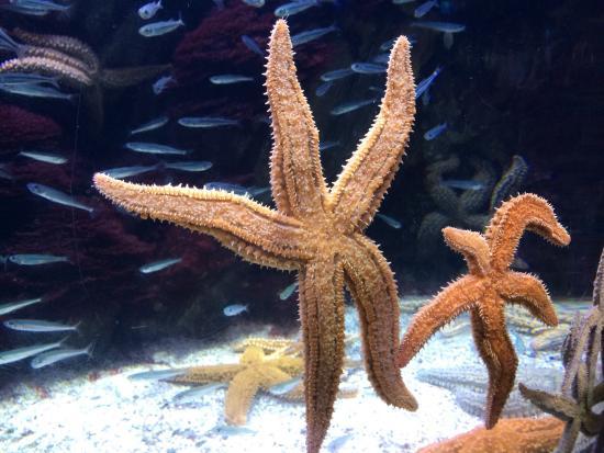 Aquarium donostia san sebastian fotograf a de aquarium - Aquarium donosti precio ...