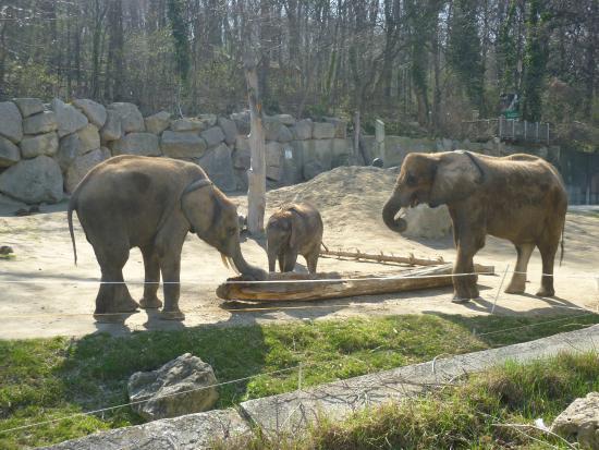 Работникам, венский зоопарк открытки