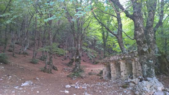 pastore palermo catania province - photo#40