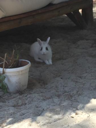 Koukounaries Beach: Il coniglietto