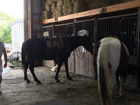 Equestrian Ridge Farm: photo2.jpg
