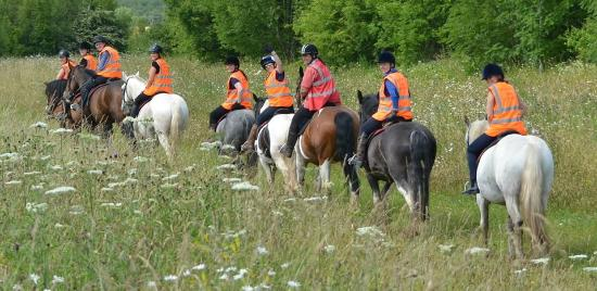 Derbyshire Pony Trekking