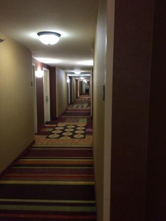 Hilton Garden Inn Scottsdale Old Town: Hallway