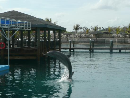 Water Slides Picture Of Ocean World Adventure Park Puerto Plata Tripadvisor