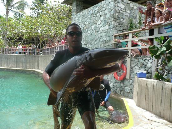 Water Slides Picture Of Ocean World Adventure Park Marina And Casino Puerto Plata Tripadvisor