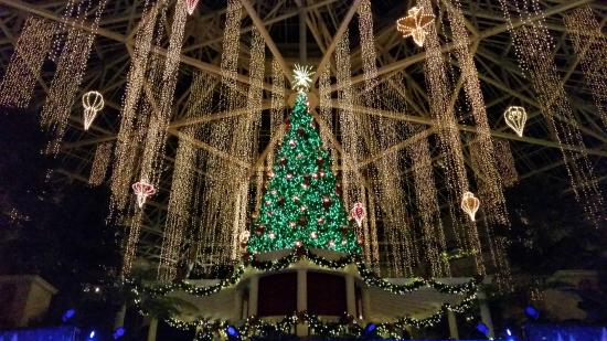gaylord palms resort convention center beautiful christmas tree - Christmas At Gaylord Palms
