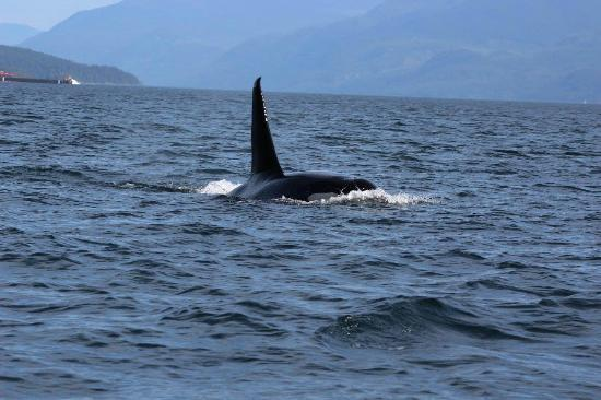 Leisure Suit Charters : Orca