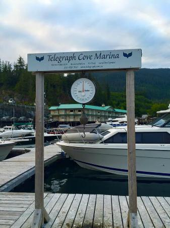 Leisure Suit Charters : Telegraph Cove