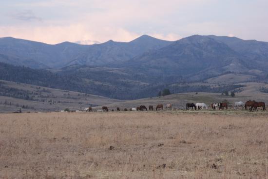 Bitterroot Ranch : The herd eating dinner