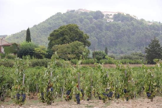 Caveau du Moulin de la Roque : Vue des vignes cultivées par le moulin de la roque