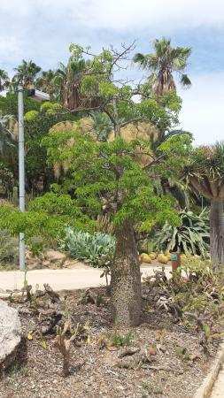 Jard n bot nico barcelona montjuic fotograf a de for Barcelona jardin botanico